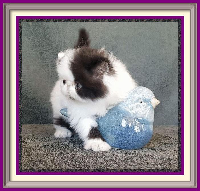 Baby kitten LH girl 2